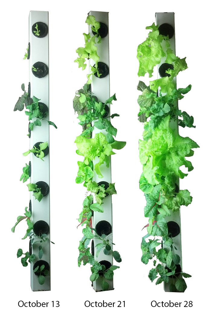 Vertical Aquaponics Archives The Aquaponic Source